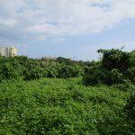 沖縄,不動産,うるま市,売土地,昆布,山林,1万㎡以上,開発許可