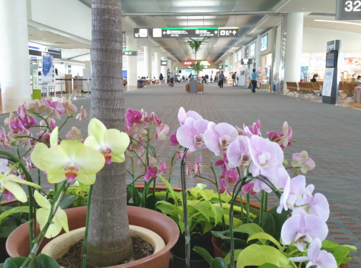 入口をふさげない沖縄